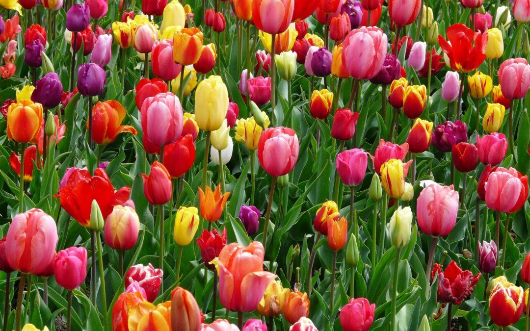 Quelques bonnes raisons de se réjouir du printemps